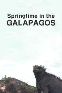Springtime in the Galapagos